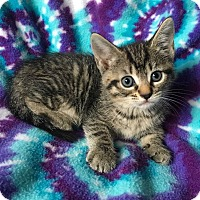 Adopt A Pet :: Hadley - Zolfo Springs, FL