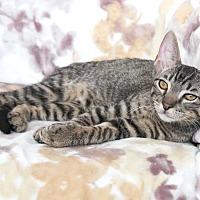 Adopt A Pet :: Updike - St Louis, MO