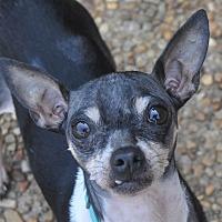 Adopt A Pet :: Jagger - Atlanta, GA