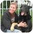 Photo 3 - German Shepherd Dog Mix Dog for adoption in Los Angeles, California - Shadow von Strasberg