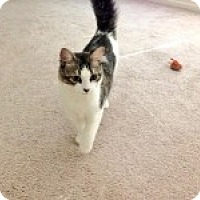 Adopt A Pet :: Jillie - Modesto, CA