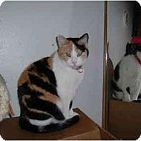 Adopt A Pet :: Attie - Farmington, AR