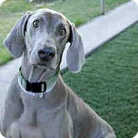 Adopt A Pet :: BOSCHE - Malibu, CA