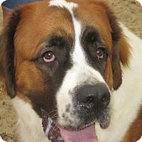 Adopt A Pet :: LEAH - ADOPTION PENDING - Sudbury, MA