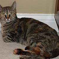 Adopt A Pet :: Mabel - Shelbyville, KY