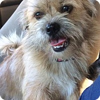 Adopt A Pet :: Pippi in Ct - Manchester, CT
