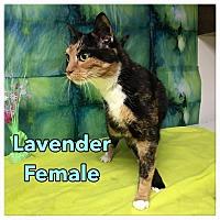 Adopt A Pet :: Lavender - Simpsonville, SC