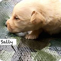 Adopt A Pet :: Sally Schultz - Alpharetta, GA