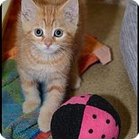Adopt A Pet :: Clinton - Brick, NJ