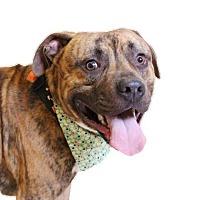 Adopt A Pet :: Max - Chico, CA