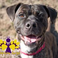 Adopt A Pet :: Coco - Georgetown, TX