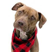 Adopt A Pet :: ROCCO - Orlando, FL