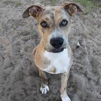 Adopt A Pet :: Noah - Inverness, FL