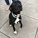Adopt A Pet :: Razzle
