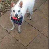 Adopt A Pet :: Willa - Long Beach, CA