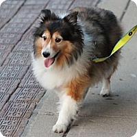 Adopt A Pet :: Duffy - Indiana, IN