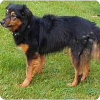 Adopt A Pet :: Kiley - Toronto/Etobicoke/GTA, ON