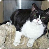 Adopt A Pet :: MacDougal - Colmar, PA