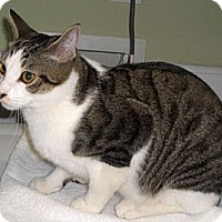 Adopt A Pet :: Desi - Richmond, VA