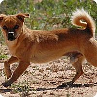 Adopt A Pet :: Rusty - Winchester, CA