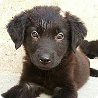 Adopt A Pet :: Bert*ADOPTED!* - Chicago, IL