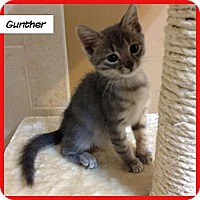 Adopt A Pet :: Gunther - Miami, FL