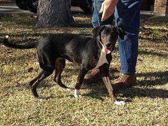 Labrador Retriever Mix Dog for adoption in Slidell, Louisiana - Hilda