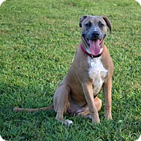 Adopt A Pet :: Jillian - Knoxville, TN