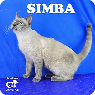 Siamese Cat for adoption in Carencro, Louisiana - Simba