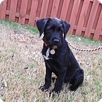 Adopt A Pet :: Bernadette - PORTLAND, ME