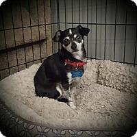 Adopt A Pet :: Heidi - LITTLETON, CO