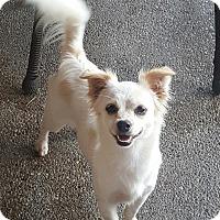 Adopt A Pet :: Molly - London, KY