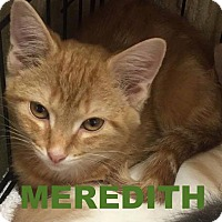 Adopt A Pet :: 3Meredith - Delmont, PA
