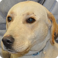 Adopt A Pet :: Charlie - Osage Beach, MO