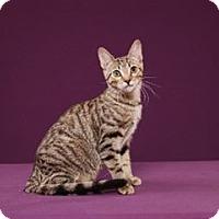 Adopt A Pet :: Lyra - Cary, NC