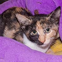 Adopt A Pet :: Cuteseven - Elmwood Park, NJ