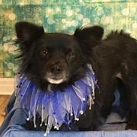 Adopt A Pet :: Ryder - Dallas, TX