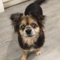 Adopt A Pet :: Linda - Glen Allen, VA