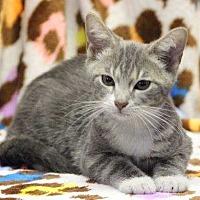 Adopt A Pet :: Crown - Washington, DC
