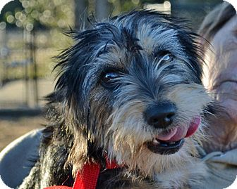 Terrier (Unknown Type, Medium)/Terrier (Unknown Type, Medium) Mix Dog for adoption in Searcy, Arkansas - Lexi