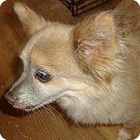 Adopt A Pet :: WALNUT - Leesport, PA