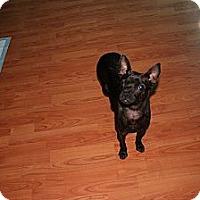 Adopt A Pet :: Sadie - maryville, TN
