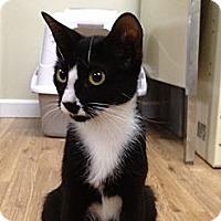Adopt A Pet :: Smudge - Monroe, GA