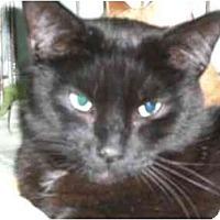 Adopt A Pet :: Kit - Lombard, IL