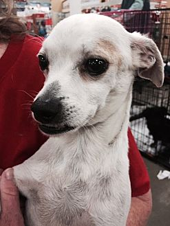 Terrier (Unknown Type, Medium)/Terrier (Unknown Type, Medium) Mix Dog for adoption in Fresno, California - Paco
