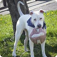 Adopt A Pet :: Annie - St Helena, CA