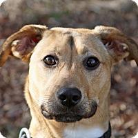 Adopt A Pet :: Morticia - Joliet, IL
