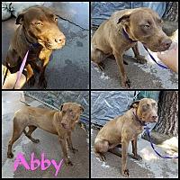 Adopt A Pet :: Abby - Lancaster, CA