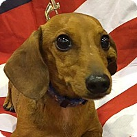 Adopt A Pet :: Roger - Pearland, TX