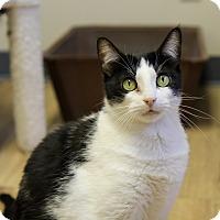 Adopt A Pet :: Montreal - Fountain Hills, AZ